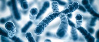 Хромосомный набор